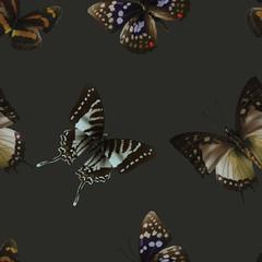 butterfly seamless 06 black