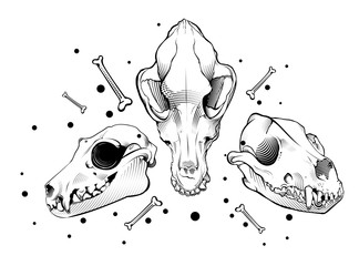 Vector dog skull. engraving style