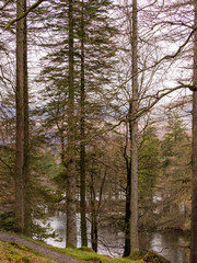 Early springtime at Tarn Hows, Coniston, Cumbria, UK