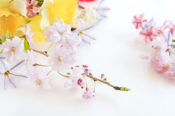 spring flowers wirh cherry blossom on white background