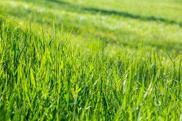 Plain green meadow