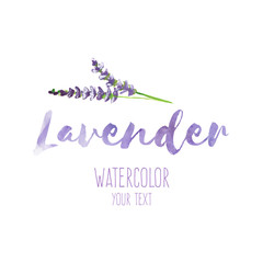 Word Lavender and hand painted lavender branch, illustration