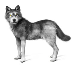 Grey wolf on a white background . 3d rendering