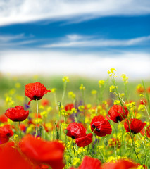 Poster Poppy Summer wildflowers and clouds