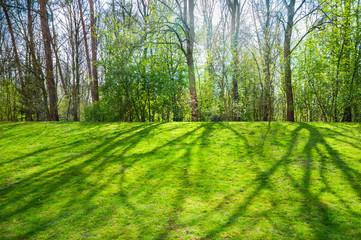 Fototapete - Warme Frühlingssonne zeichnet die Schatten lichter Bäume auf eine grüne Rasenfläche, sonniger Frühlingstag im April, erstes Frühlingsgrün, Licht und Schatten, Halbschatten