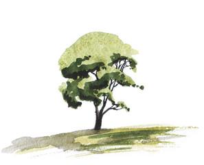 watercolor illustration of green tree