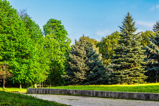 old city park with chestnut and conifer trees