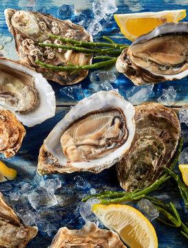 Opened fresh raw marine oysters
