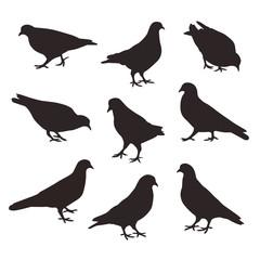Set of a posing dove birds, vector silhouette.