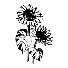 Sunflower. Doodle style.