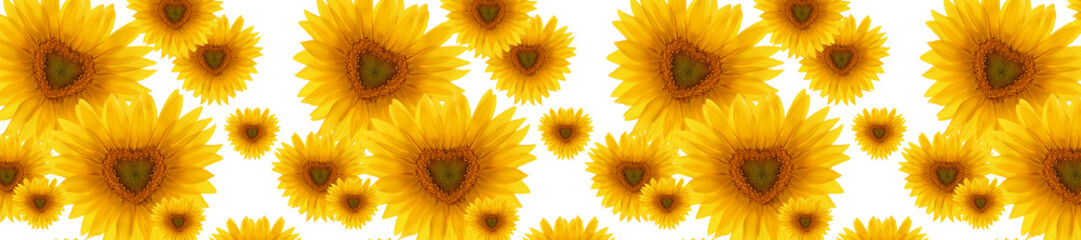 header panorama  pattern flower sunflower  heart-shaped