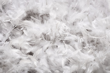Background texture of soft white down feathers