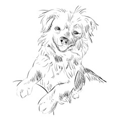 Vector sketch of dog.