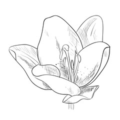 Vector sketch of flower