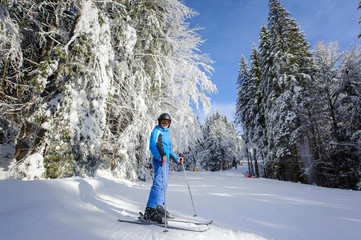 Wide low point of view shot of happy woman skier on a ski slope in the forest with big beautiful trees covered in snow. Winter sports concept. Carpathian Mountains, Bukovel