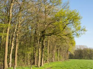 Frühling im Münsterland