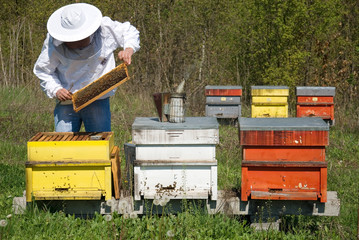 Beekeeper carries out a review apiary