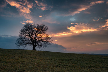 The lonely tree, near Marinka village, Bulgaria
