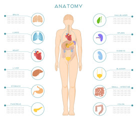 A medical poster with the human anatomy and internal organs.
