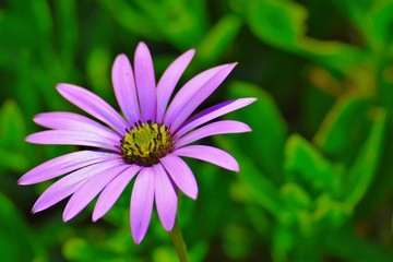 A pink flower with green background