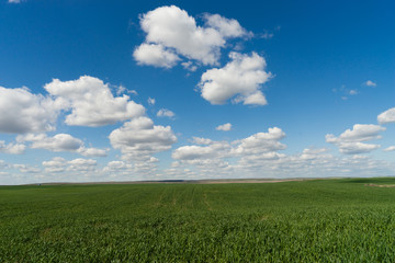 Farm Field Springtime Horizon Rural Countryside Fluffy Clouds