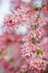 цветущая ветка