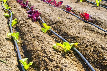 impianto di irrigazione per il risparmio idrico in un orto