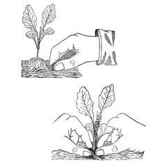 Gardening vintage illustration, sowing plants