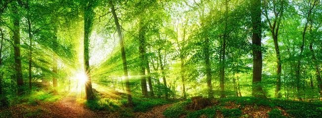Wall Mural - Wald Panorama mit durch Blätter leuchtenden Sonnenstrahlen