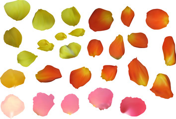 yellow and pinkrose petals isolated on white