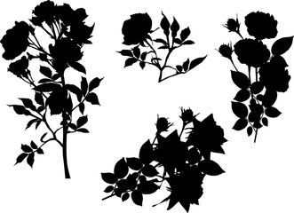 set of four black roses on white
