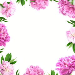 Frame from pink peony flower on white background with copy space