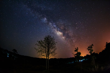 Silhouette of Tree and Milky Way. Long exposure photograph.With