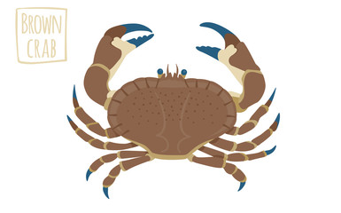 Brown crab, vector cartoon illustration