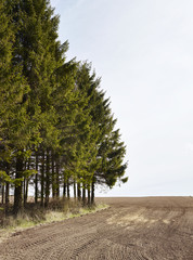 View of agricultural field with trees