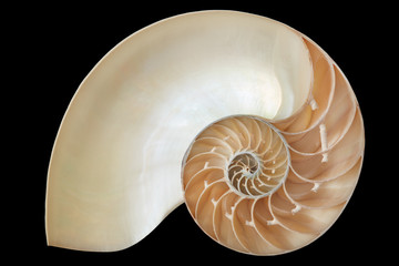 Nautilus shell, perfect geometric pattern on black, clipping path