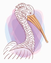 Pelican bird, vector  illustration, sign.  logo . flat design, hand draw