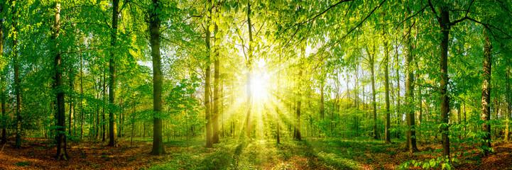 Fototapete - Lichtung im Wald bei Sonnenuntergang