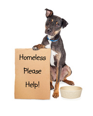 Fototapete - Homeless Dog With Sign and Empty Bowl