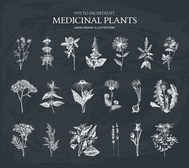 Vector Collection of 19 hand drawn Spices and Herbs. Botanical plant illustration. Vintage Medicinal Herbs and Poisonous Plants sketch set isolated on chalkboard