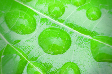 Macro bubble and texture of green