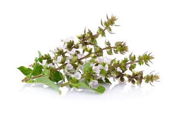 Sweet Basil flower on white background