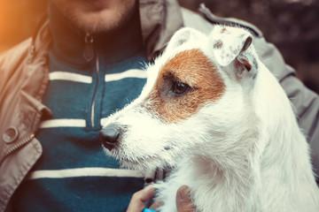 Cute puppy dog Jack Russel terrier dog