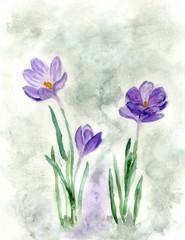 Crocus Flowers Painting
