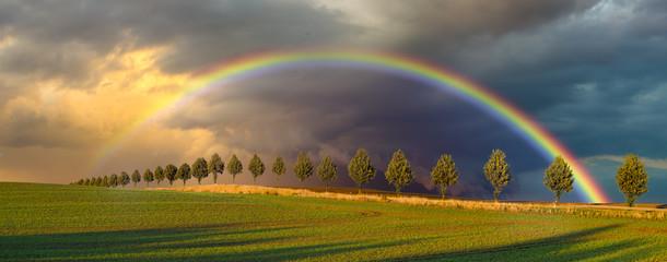 Fototapeta Wielobarwna tęcza nad wiosennym polem