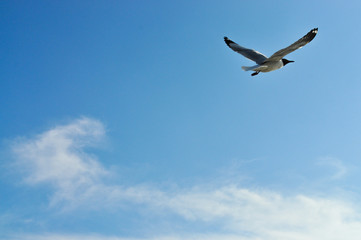 Flying birds in blue sky background