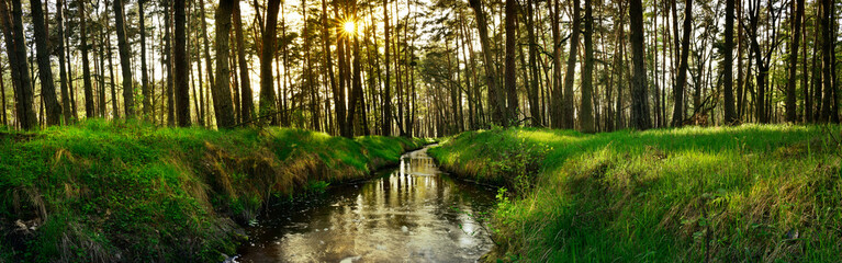 Wall Mural - Panoramic view of forest brook at sunset