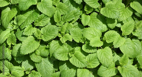 Plantes aromatiques stock photo and royalty free images on pic 108800204 - Plantes aromatiques cuisine ...