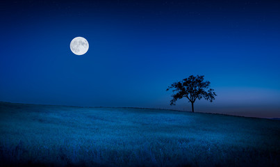 Moon over a meadow