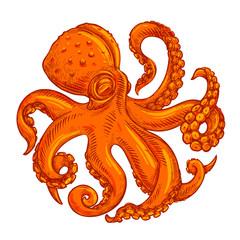 vector image, logo octopus on white background